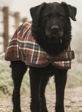Zimą pamiętaj o zwierzętach. Pomóż im przetrwać mrozy - http://tvnmeteo.tvn24.pl/informacje-pogoda/polska,28/zima-pamietaj-o-zwierzetach-pomoz-im-przetrwac-mrozy,187702,1,0.html
