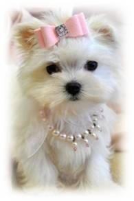 Cutest puppy EVER!!! :))