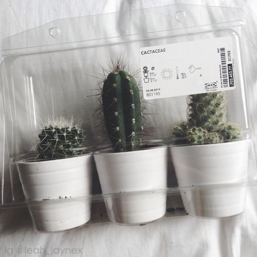 cactus tumblr grunge plants e white grunge pinterest cacti grunge and plants. Black Bedroom Furniture Sets. Home Design Ideas
