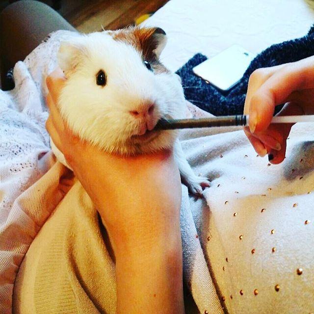 Pin On Animals