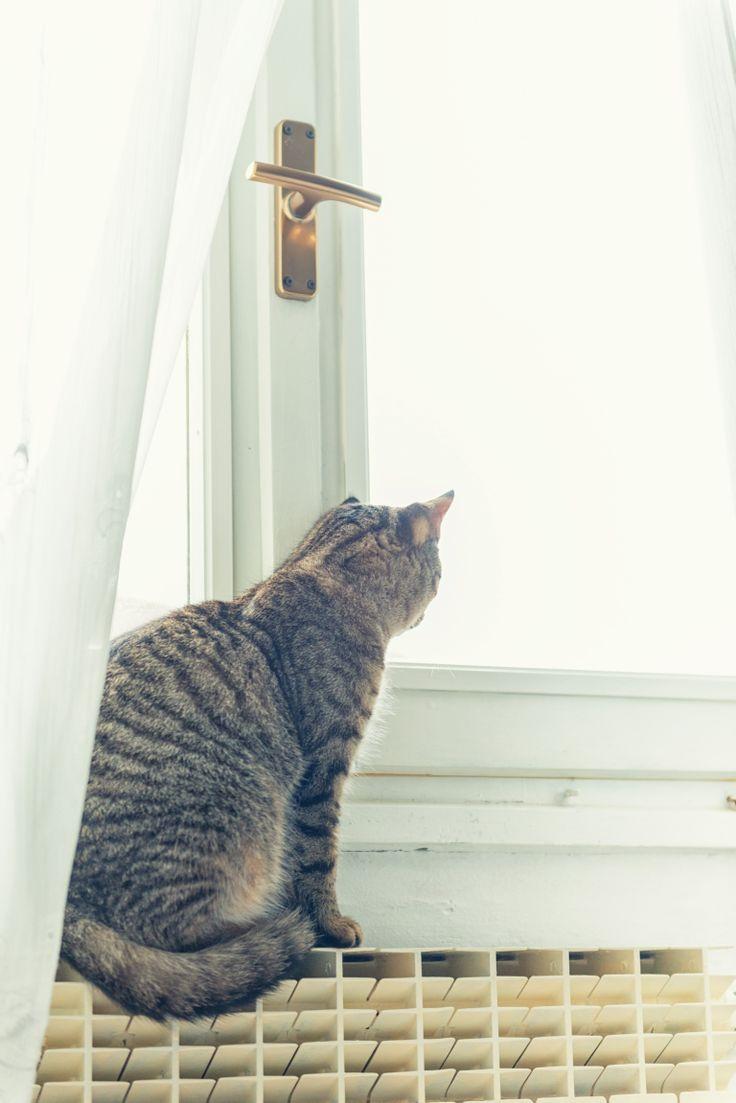 My cat at window