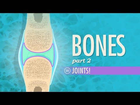 Joints: Crash Course A&P #20 by thecrashcourse: We continue our look at your bones and skeletal system, skipping over the silly kid's song in favor of a more detailed look at your your axial and appendicular skeleton. This episode also talks about the structural and functional classifications of your joints and the major types of body movement that they facilitate.***Crash Course is now on Patreon! You can support us directly by signing up at h