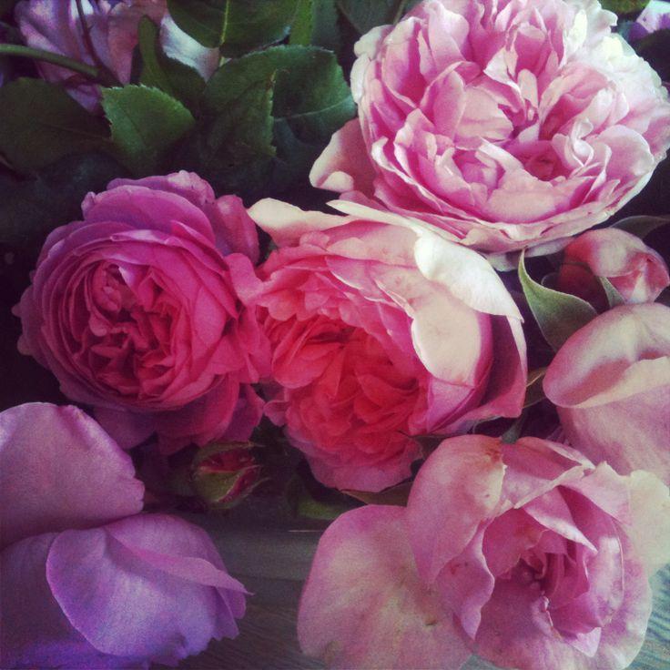 Selvom det ikke er mine roser, så fryder jeg mig gerne over naboernes også.