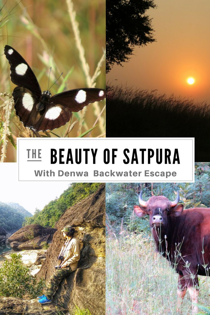 Satpura national park boasts of a variety of flora and fauna and is the largest park in Central India.  Enjoy the luxurious eco wildlife retreat #WithPugdundee , Pugdundee Safaris!