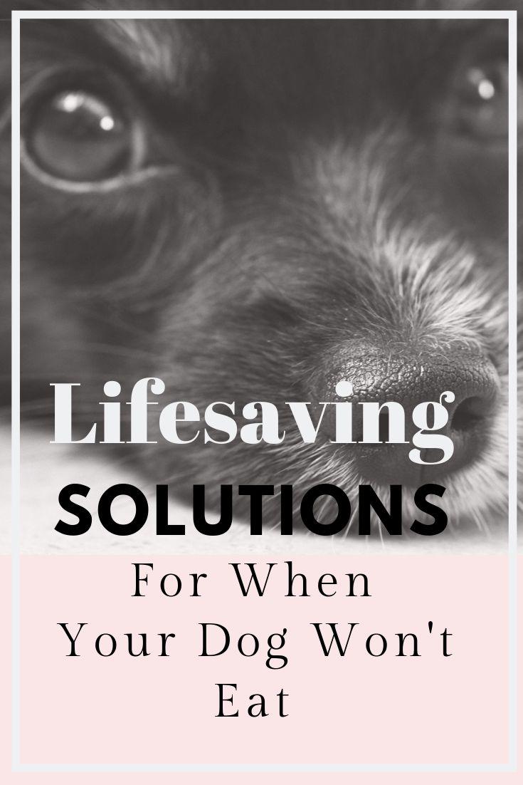 how to get a dog to take a pill when he won't eat