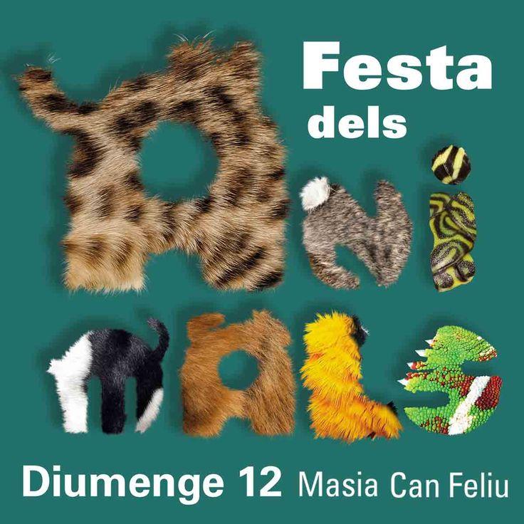 II Festa dels Animals de Sant Quirze del Vallès   12 de febrer 2017
