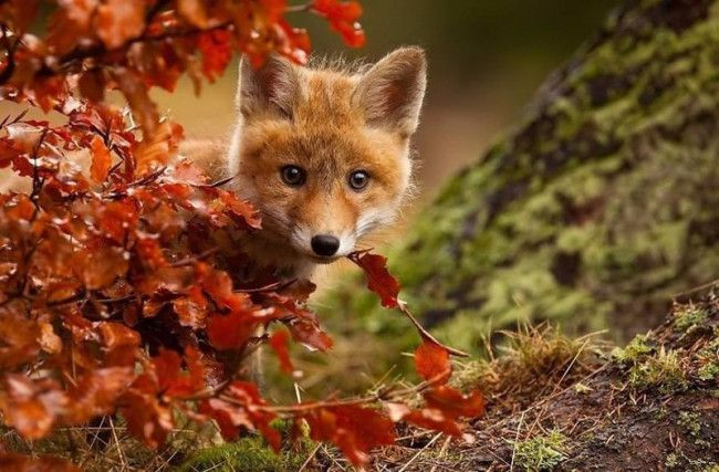 Animals that Enjoy the Autumn (10 Pics)