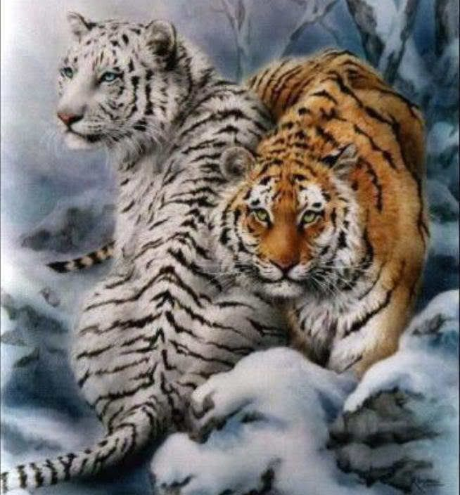 Animals And Pets White Tigers