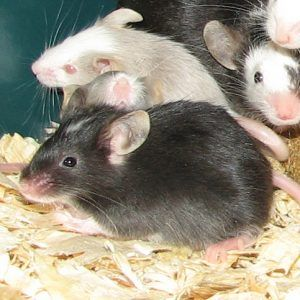 Dwarf Hamster Cages UK | WebNuggetz.com