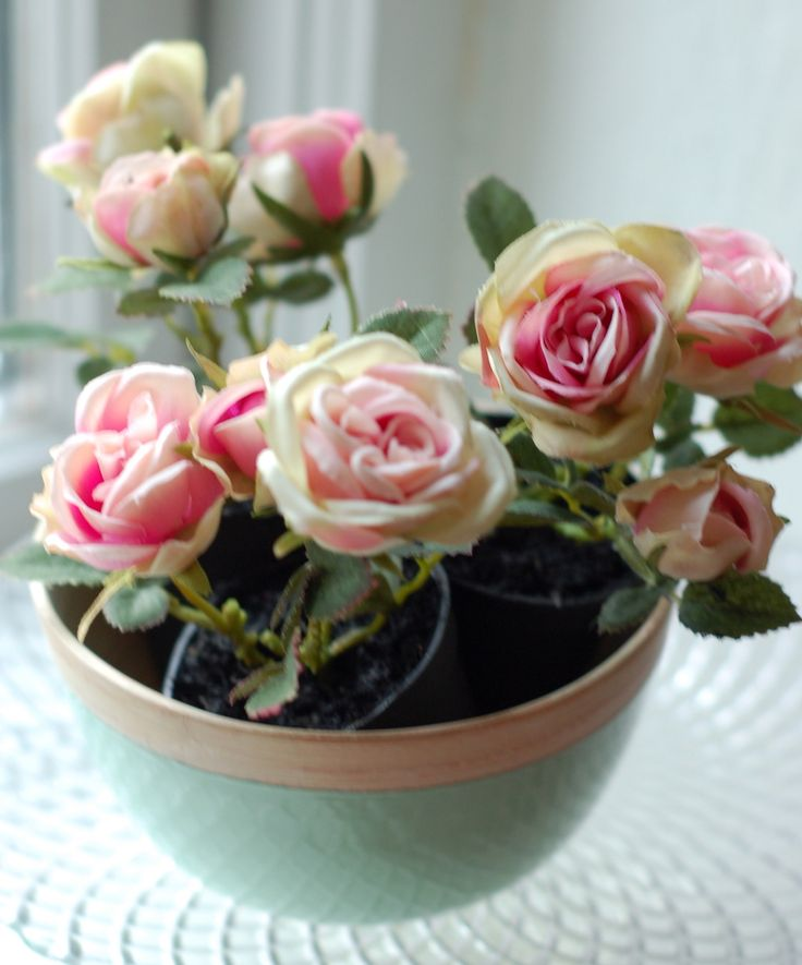 petite roses in pots in bowls