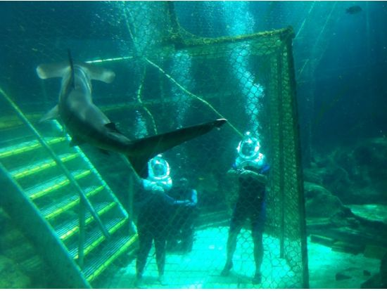 oahu hawaii shark trek | Shark Trek at Sea Life Park Hawaii, Oahu / Waikiki tours & activities ...