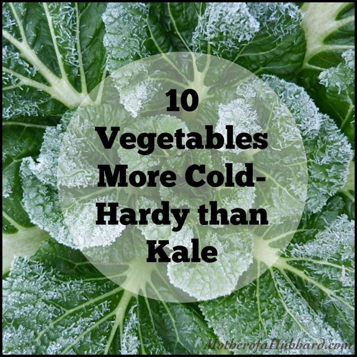 10 Vegetables More Cold Hardy Than Kale! Visit us at www.wbfarmstore.net for quality garden supplies!