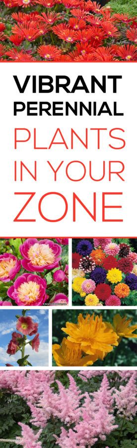 Perennial Plants give you the most bang for your buck since they grow back year after year.  Check out this list to find the most vibrant colored plants for your area.  This website is a great resource for any gardener.