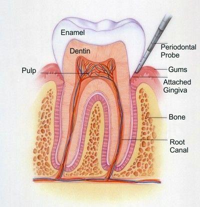 I. Tratamentul Parodontozei  Prin tratamentul parodontozei se urmareste indepartare tesutului necrotic, de granulatie din jurul dintelui cu ajutorul chiuretelor. Apoi se netezeste radacina, astfel indepartandu-se microretentiile in care cantoneaza bacteriile si primul strat de ciment infectat. In cele din urma, se dezinfecteaza cu ajutorul antisepticelor locale.  Pentru detalii si programari, adresati-va medicului parodontolog: 0723.726.125 / 031.805.9027 / contact@gentledentist.ro