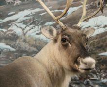 Talvinen luonto -tehtävärastit 1.-4. luokille « OuLUMA – Pohjois-Suomen LUMA-toiminnan foorumi.