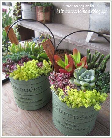 Uma ideia para renovar o jardim: suculentas no balde. #buckets #succulents #suculentas #balde #jardim