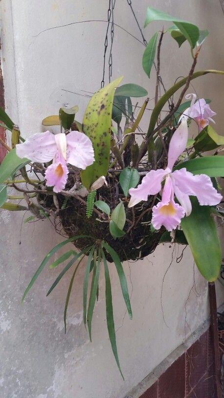 Más Orquideas