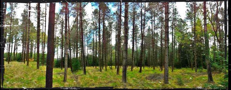 Trees at Blackwater