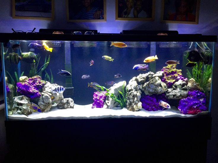 Best 25 cichlid aquarium ideas on pinterest tropical for African cichlid tank decoration