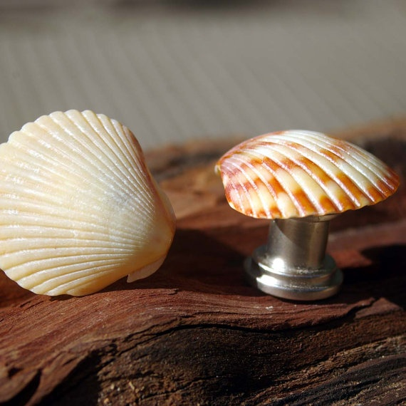 17 Best Images About Shell Knobs On Pinterest