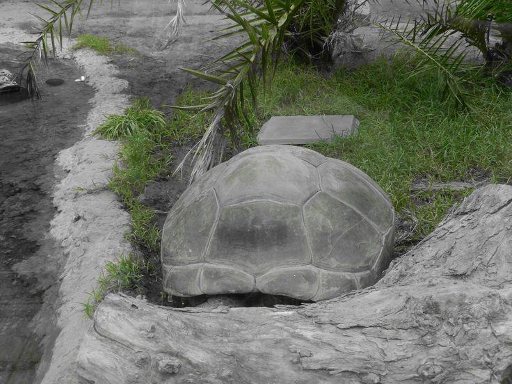 https://flic.kr/s/aHsjMj4NNs   Reptilano, Zoológico de Buenos Aires   Reptilano, Zoológico de Buenos Aires