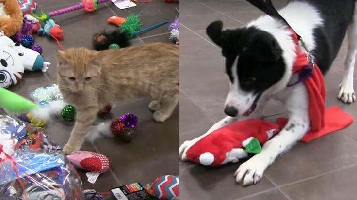 Cães e gatos à espera de adoção escolhem seus presentes de Natal em vídeo fofo