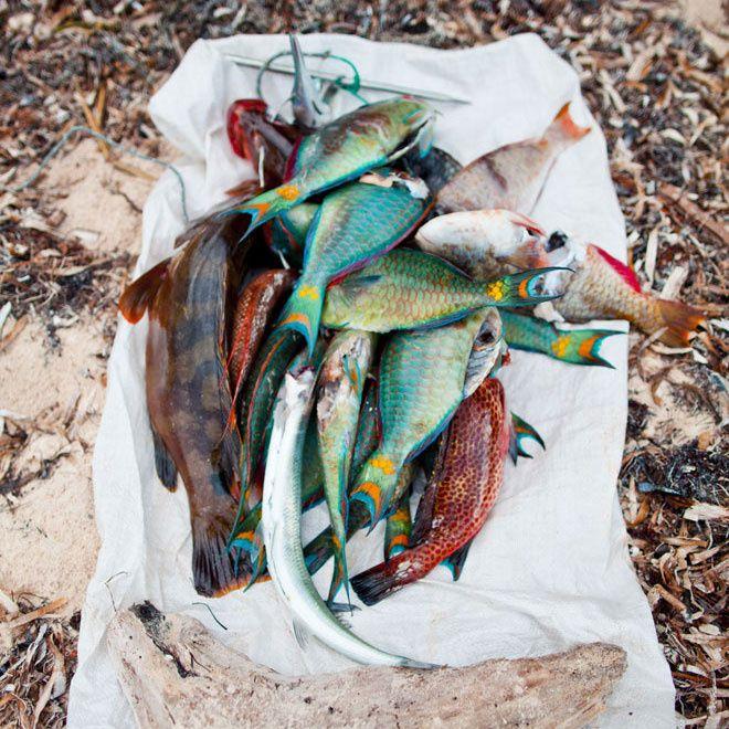 Un restaurant de poissons : El Templete la Havane Cuba http://www.vogue.fr/voyages/adresses/diaporama/guide-meilleurs-adresses-a-la-havane-cuba-hotels-restaurants-musees/31269#un-restaurant-de-poissons-el-templete-la-havane-cuba