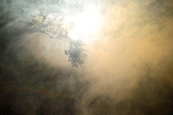 Boomtakken in de rook met een mooie lichtval