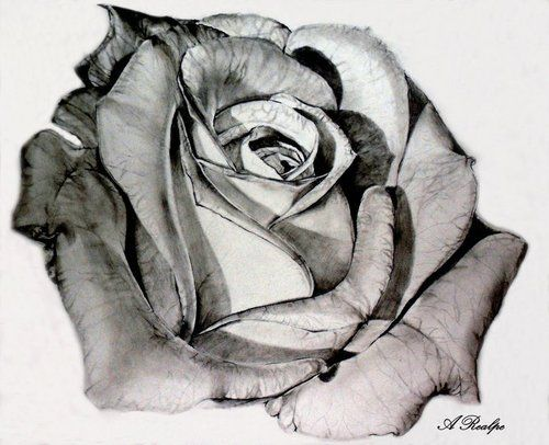 I think I've found the style for my rose tattoo, and this is it! this is stunning