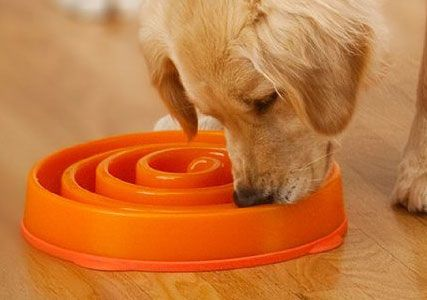 dog eating too fast?