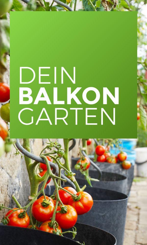 Tipps & Tricks zur Pflege und Auswahl der Pflanzen…