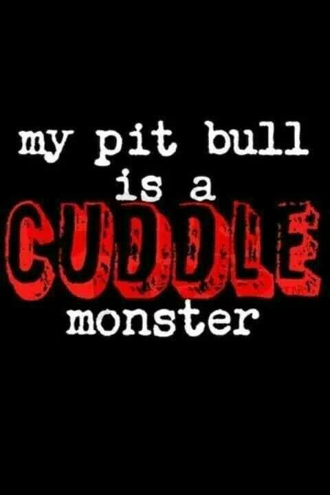 If people want to think pitbulls are monsters, they should at least get the cuddle part right.