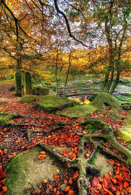 Padley Gorge, Distrito de Peak, Derbyshire, Inglaterra.