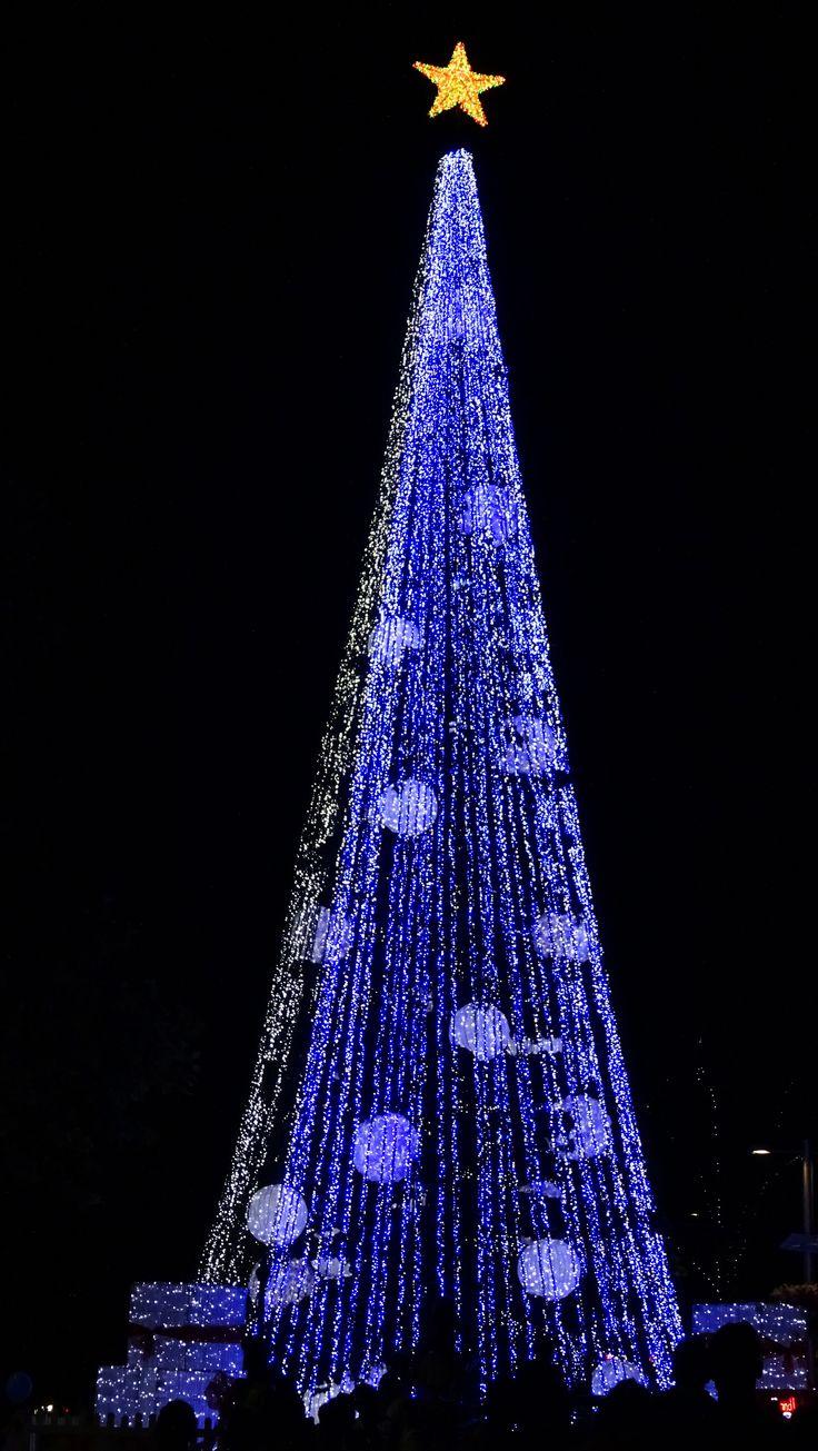 Canberra - Australia World Record Christmas Tree