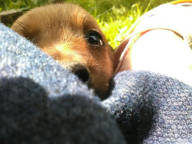 #cutebabydog #simplyadorable