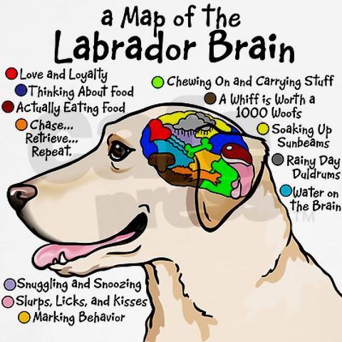 Yellow Lab Brain Shirt