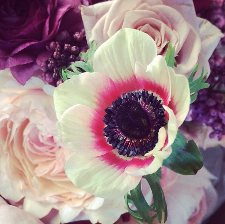 Prunella Flowers (Victoria Australia) / View Portfolio on The LANE