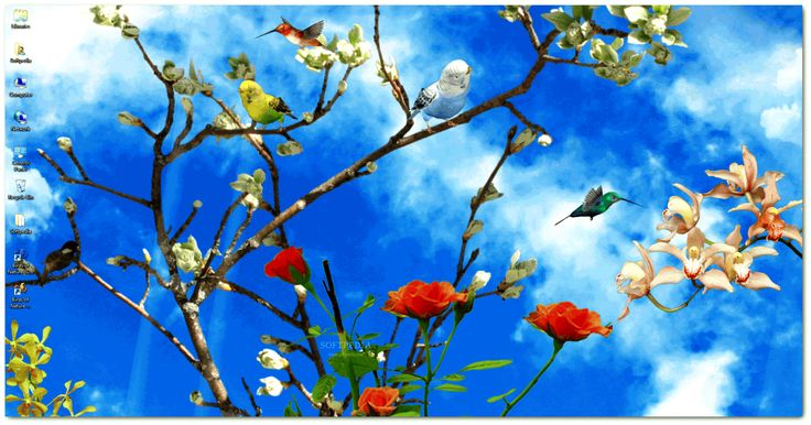 3D Animated Background For Desktop Birds photos of 3D Animated ...