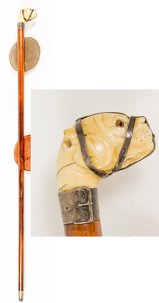 "Victorian bulldog walking stick with celluloid bulldog and sterling silver base with sterling strap around bulldog's face. Celluloid was an inexpensive replacement for ivory beginning as early as 1850 or 1860. The bulldog motif is very realistic and measures 2.5"" x 2"". The dog's glass eyes and pleasant expression give it a pleasant appearance. The base of the bulldog is made of silver and looks like a silver buckled belt. The 35.5"" wooden shank looks to be cocobolo wood, which is no longer…"