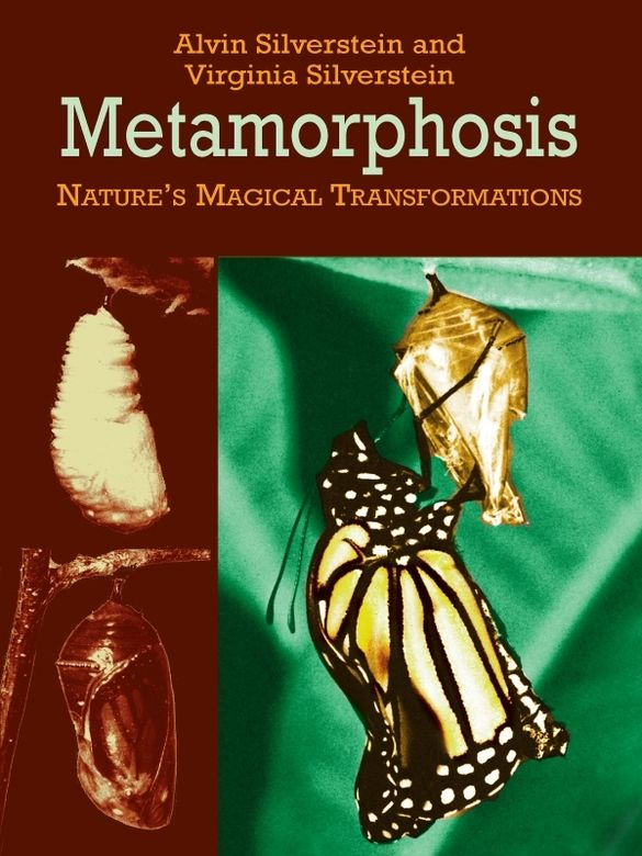 Metamorphosis by Alvin Silverstein  With this easy-to-read book, children will discover the facts behind the seemingly magical conversions that transform a wooly caterpillar into a graceful butterfly and a swimming tadpole into a leaping frog. This book presents a well-illustrated look at how some baby animals develop from a larval stage into a completely different creature.