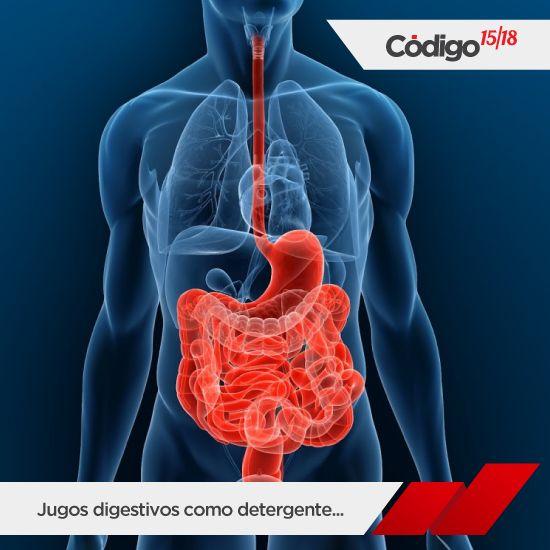 El intestino delgado tiene una longitud de tres a seis metros y es la parte de nuestro tracto digestivo que más trabaja. Nos quiere ofrecer tanta superficie como sea posible para absorber los nutrientes de los alimentos, por lo que está lleno de diminutos pliegues, sin ellos, tendría que medir 18 metros para hacer su trabajo. Nuestros jugos digestivos contienen los mismos agentes que los detergentes en polvo: enzimas digestivas y disolventes de grasa.  Los detergentes para lavar son eficaces…