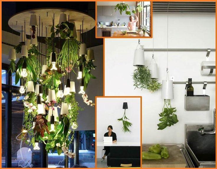 Plantas colgantes pero al rev s disenojardines - Plantas decoracion interior ...