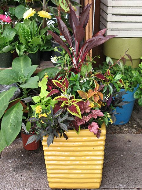 44 best tropical color container garden images on for Garden pots portland