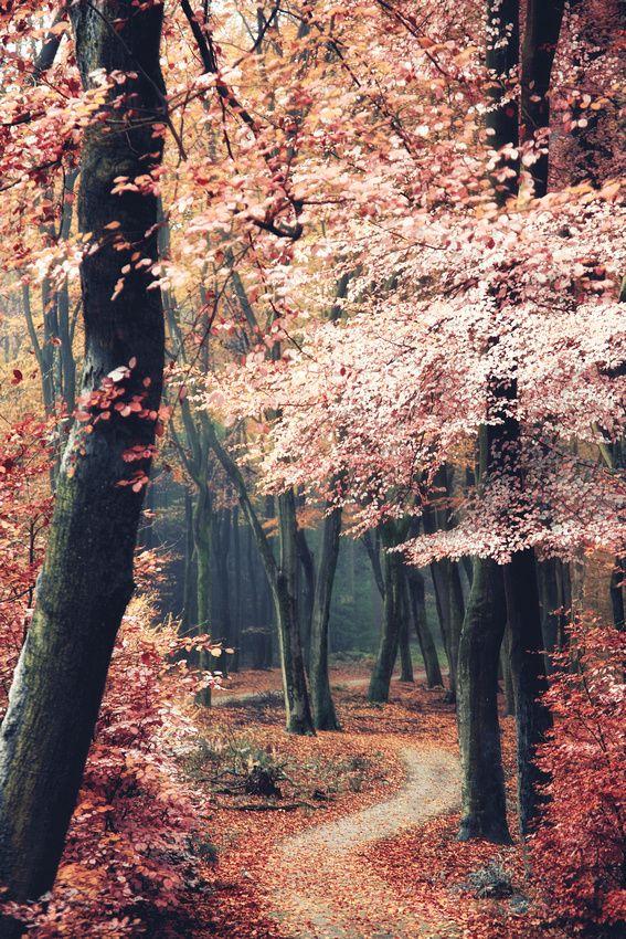 ✿♥♥✿ automne rose pastel ✿♥♥✿