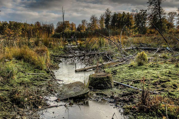 Fall in Denmark | Flickr - Photo Sharing!