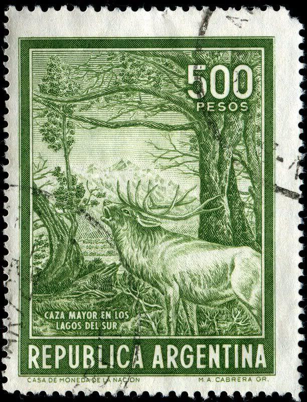 ARGENTINA- CAZA MAYOR EN LOS LAGOS DEL SUR (PATAGONIA) 1966