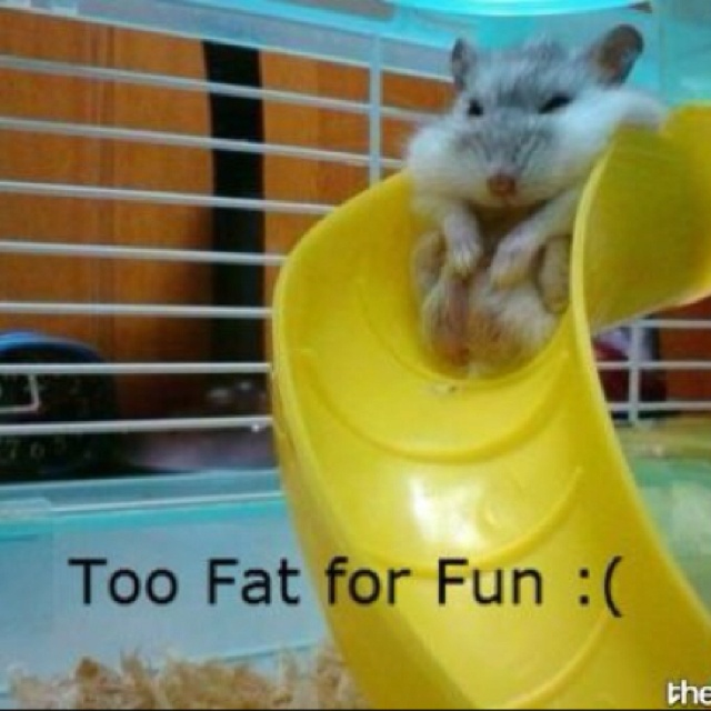 To fat for fun
