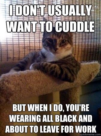 Every cat owner knows this...