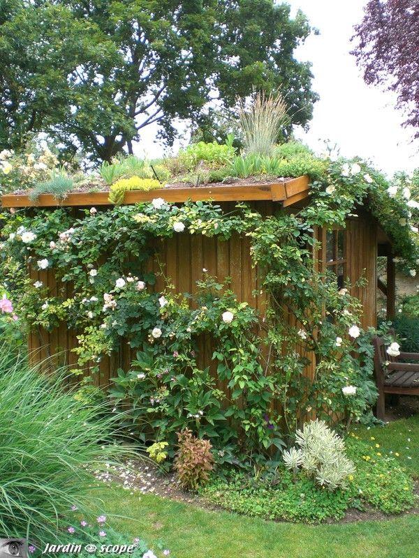 Toit végétalisé de la cabane de jardin