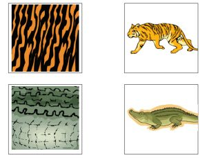 Eigenschappen dieren krokodil tijger
